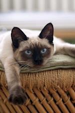 Beautiful Seal Point Siamese Cat Sitting on a Vintage Chair Journal Pet Journal