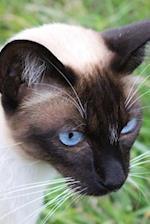 Sweet Seal-Point Siamese Cat Pet Journal