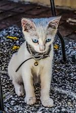 Purebred Lilac Point Siamese Cat Sitting on the Garden Wall Pet Journal