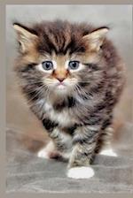 So Very Cute Maine Coon Kitten Cat Journal