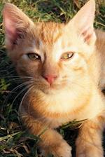 Such a Sweet Orange Kitten Cat Journal