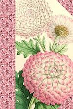 Vintage Pink Chrysanthemums Flower Journal