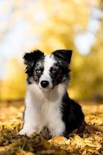 Such a Cute Australian Shepherd Puppy Dog Journal