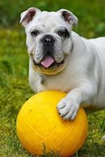 Delightful Little English Bulldog Puppy Playing in the Park Journal