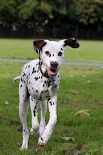 Such a Cute Dalmatian Puppy Dog Journal