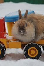 Charming Little Dwarf Bunny Rabbit in the Snow Journal