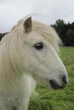 Beautiful White Shetland Pony with a Long Mane Journal