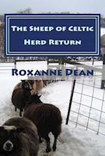 The Sheep of Celtic Herd Return