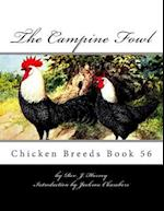The Campine Fowl