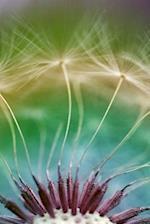 Journal Dandelion Flower Seeds Close Up