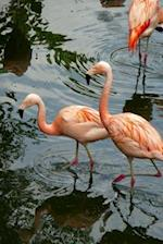 Pretty Pink Flamingoes Wading in the Water Journal