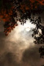 A Beautiful Tree Glowing in the Light of a Full Moon in Autumn Journal