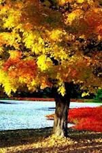Journal Bright Beautiful Autumn Tree Fall Foliage