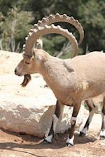 An Ibex on the Lion Ridge in the Alps Journal