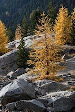 Autumn in the Alps