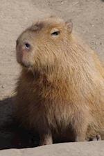 Cute Capybara Close Up Portrait Animal Journal