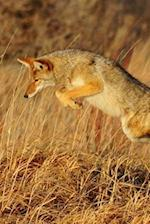A Coyote Running in the Desert Journal