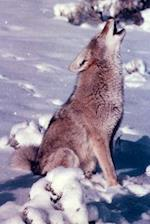 A Howling Coyote on a Rocky Peak in the Desert Journal