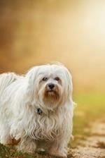 Darling White Havanese Puppy Dog in the Park Journal