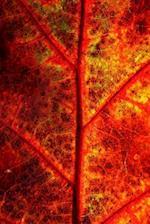 Journal Fall Leaf Autumn Foliage Close Up