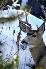 A Mule Deer Buck in a Snowy Field Animal Journal