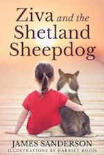 Ziva and the Shetland Sheepdogs