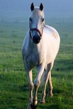 Equine Journal White Horse Galloping Across Field