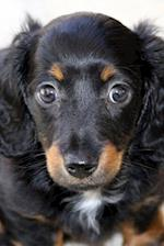 Adorable Fluffy Black and Brown Dachshund Puppy Dog Journal