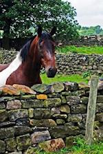 Brown and White Horse Looking Over a Stone Wall North Yorkshire England Journal