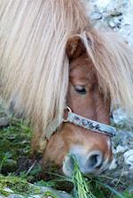 Such a Cute Shetland Pony Munching on Some Grass Journal