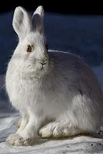 A Sweet White Snowshoe Hare in the Snow Journal