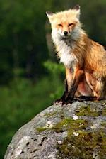 Journal Red Fox Sitting on Rock