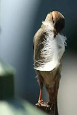 Journal Bird Holding Feather