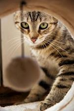 Pretty Little Tabby Kitty Cat Peeking Out at You Journal