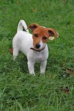 Such a Cute Little Jack Russell Terrier Puppy Dog Journal