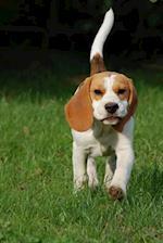 Adorable Beagle Puppy Dog Up Close Journal