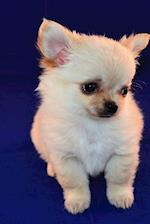 Precious Baby Chihuahua Puppy Dog Pet Journal