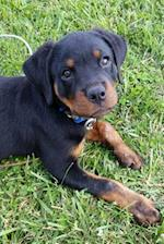 So Cute Rottweiler Puppy Dog Pet Journal