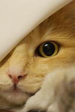 Look at That Face! Norwegian Forest Kitten Pet Journal