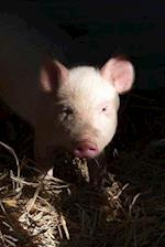 Little Pink Piglet Looking Out of the Barn Journal