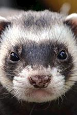 Look at That Face! Serious Ferret Pet Journal