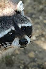 Look at That Face! Cute Raccoon Animal Journal