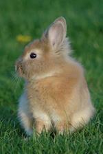 So Very Sweet Brown Baby Bunny Rabbit Journal