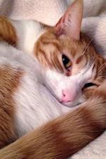 A Darling Orange and White Cat All Curled Up Journal