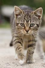 Most Adorable Little Tabby Kitty Cat Journal