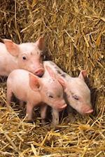 Three Cute Little Pink Piglets in the Hay Farm Animal Journal