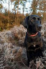 Black Labrador Retriever in a Field of Heather Journal