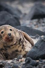 A Seal on a Rocky Shore Animal Journal