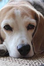 Such a Sweet Beagle Dog Pet Journal