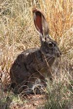 Wild Black-Tailed Jack Rabbit in an Autumn Meadow Journal
